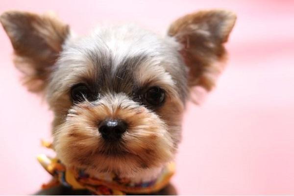 犬の癌の放射線治療!方法や費用、効果や副作用について!