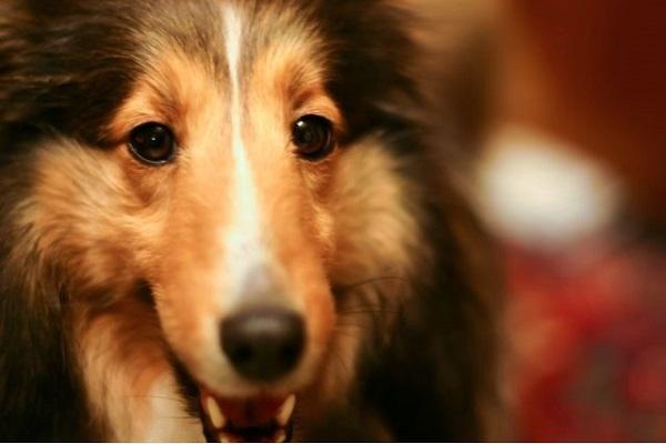 犬の歯周病の治療法や抜歯、手術などにかかる費用は?