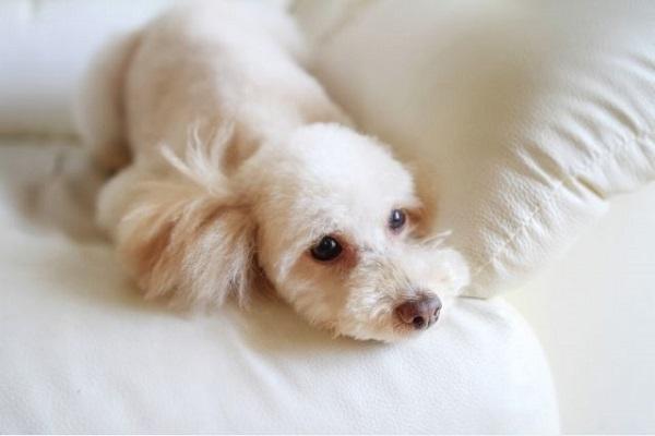 犬の癌(がん)の検査方法や費用!レントゲンや血液検査で分かる?
