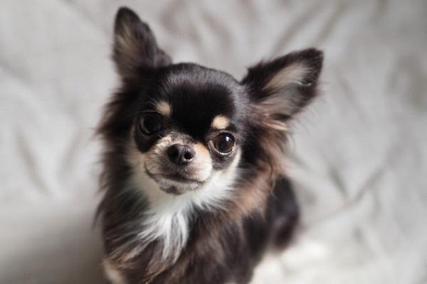 犬の癌にピロキシカムの作用や効果とは?副作用についても!