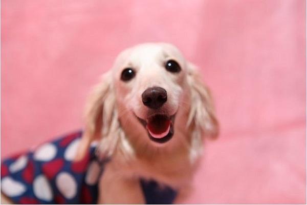 犬の口臭にプロポリスの作用や効果とは?おすすめサプリも!