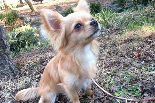 犬の寄生虫(皮膚)の種類や画像と検査や治療にかかる費用など!