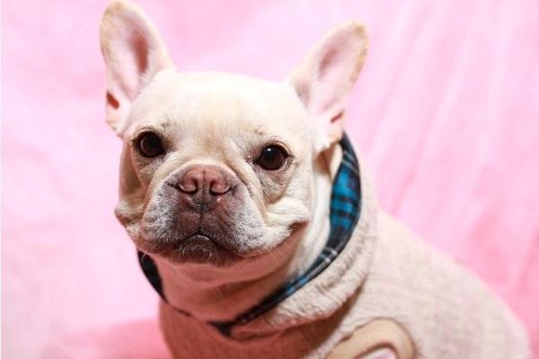 犬の避妊手術の必要性とは?手術による弊害や体の変化など!