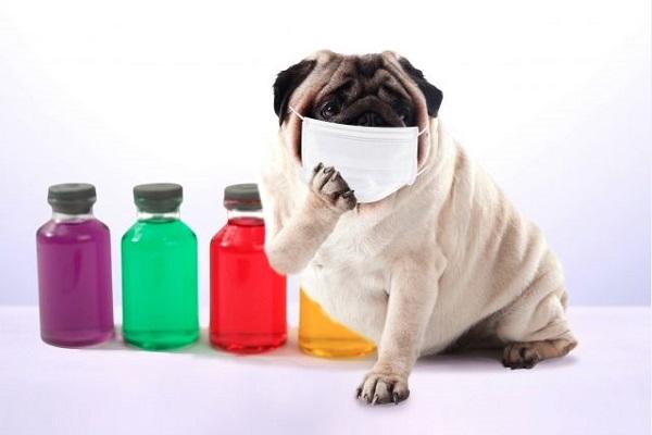 犬の口臭!腐敗臭やアンモニア臭で考えられる原因や病気!