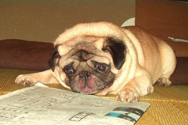 犬のアトピーに乳酸菌の作用や効果とは?おすすめサプリも!