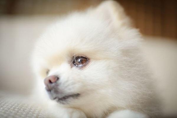 犬の子宮蓄膿症の内科的治療の方法、経過や予後について!