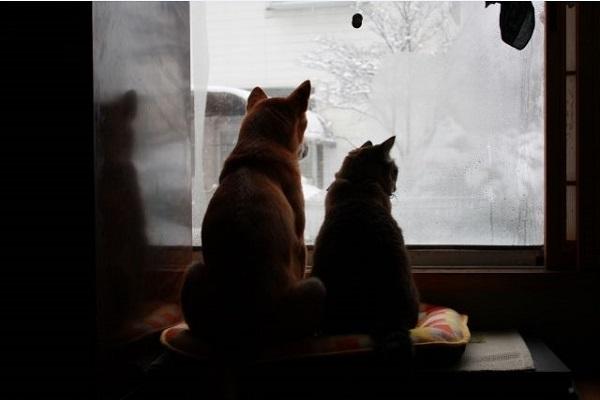 ペットの里(岩手)の犬猫の里親になるには?条件や費用,寄付など!