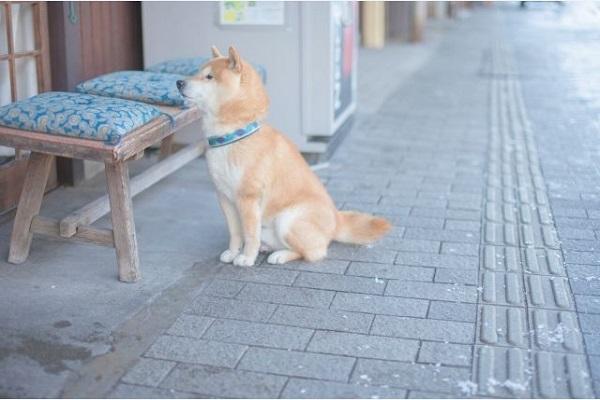 犬の去勢はいつまでにすると良い?手術すると大人しくなる?