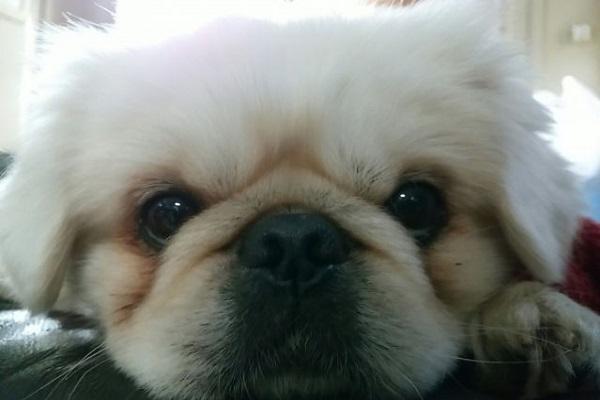 犬の皮膚の保湿剤やクリームおすすめ!乾燥やフケ,痒みなど!