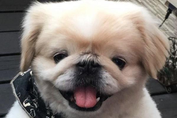犬のいびきが大きいのは異常?考えられる原因と病気の可能性!