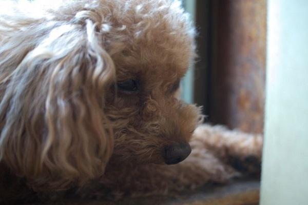 犬の腫瘍の病理検査(生検や細胞診)!方法や費用について!