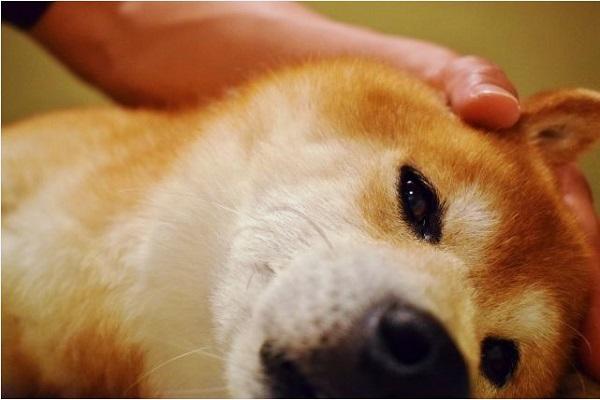 犬のアカラスの検査や治療法とは?再発や完治の可能性は?