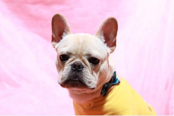 犬のアカラスの治療にブラベクト錠の効果や副作用とは?
