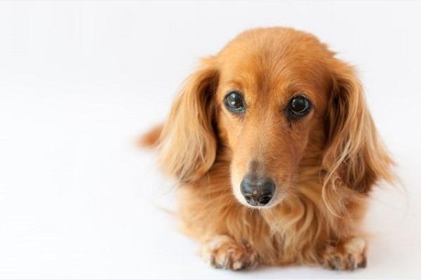 犬が寒さで食欲不振や体調不良(下痢や嘔吐)に!治療や対処法!
