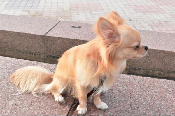 犬の下痢が治らない!必要な検査や方法、費用などまとめ!