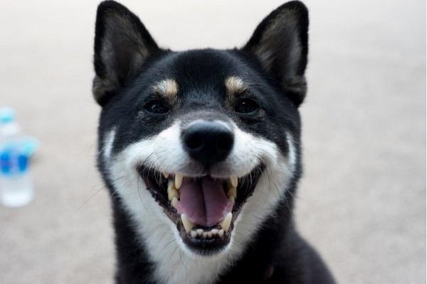 犬の目や鼻、口周りの脱毛!考えられる原因や病気について!