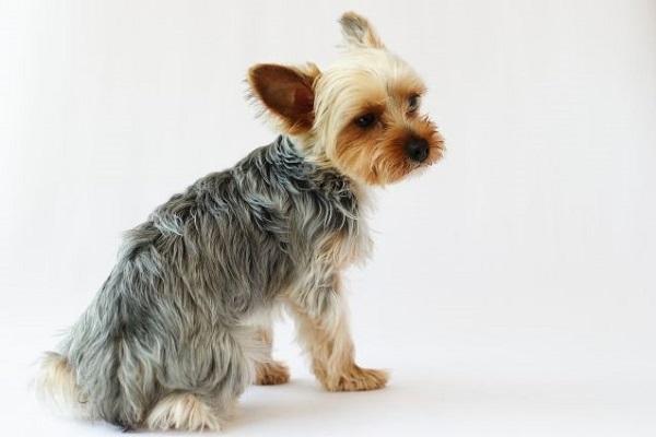 犬の胃腸炎に効果的なサプリメント!繰り返す場合の対策にも!