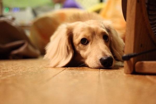 犬の下痢にエビオス(ビール酵母)の効果は?整腸作用や投与量など!