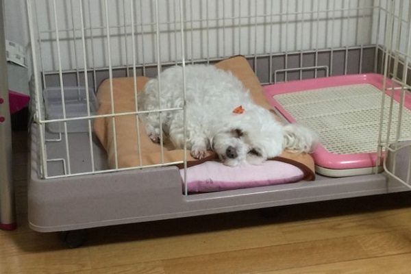 犬の胃腸炎!点滴や入院が必要な症状や治療法とは?