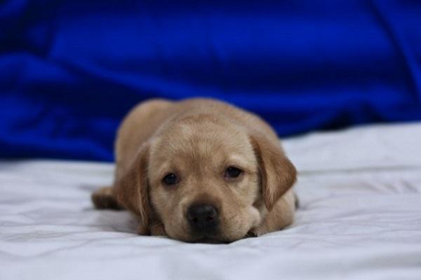 犬の下痢が長期間続く場合に考えられる原因や病気について!