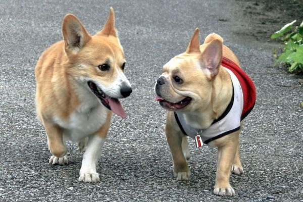 犬の胃腸炎は他の犬や人間にうつる?原因によっては可能性が?