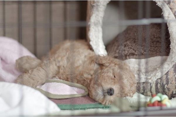 犬のペットホテル!ストレスによる下痢の可能性や対処法など!