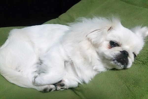 犬の腸閉塞!検査~手術の流れ~入院期間や術後の経過など!