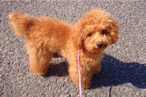 犬が後ろ足を上げる,けんけんで歩くなどで考えられる原因は?