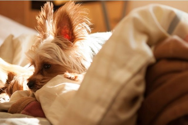 犬の脱毛と体重減少(痩せる)で考えられる原因や病気について!