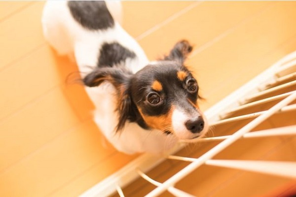 犬の椎間板ヘルニアの検査法(脊髄造影・CT・MRI)や費用など!