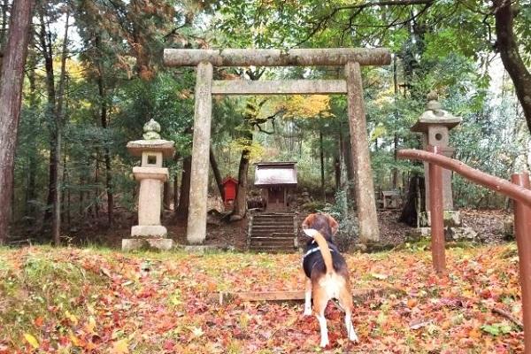 大滝神社の犬(ペット)の祈祷料金や時間など!健康長寿の祈願に!