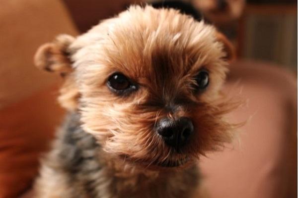犬の膀胱炎の治療で点滴や入院が必要な場合やその症状とは?