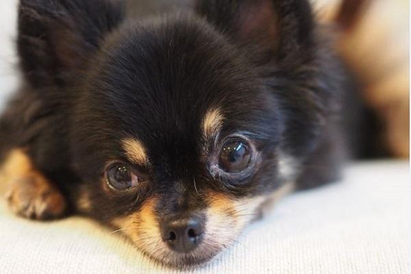 犬のてんかんの薬の種類や副作用など!やめるとどうなる?