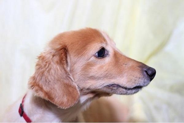 犬のてんかんの検査方法や費用など~診断までの流れ~!