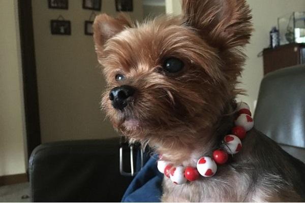 犬のてんかんに漢方薬の効果とは?種類や発作抑制の作用など!