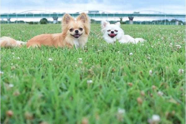 犬のフィラリア予防の時期はいつ?地域(都道府県)による目安!