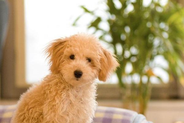 犬のフィラリア予防の注射について!安全性や副作用など!