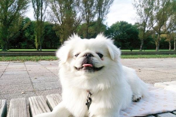 犬の熱中症の初期サイン~応急処置!冷やす場所や方法など!