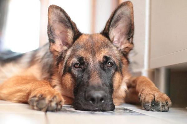 警察犬訓練士になるには見習いから!休みや給料,勤務時間など!