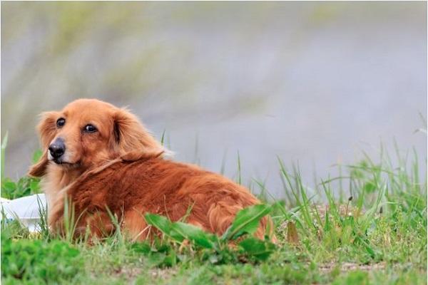 犬の骨関節疾患のケアや予防の療法食、ドッグフードの選び方!