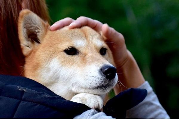 犬の腎不全の嘔吐や下痢の症状!原因や治療と予防法など!