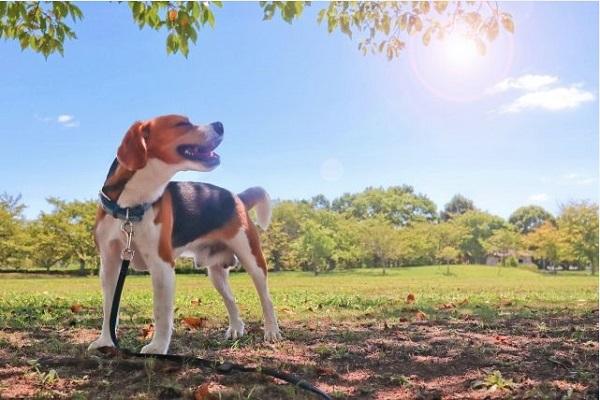 犬が頭をブルブル振る理由とは?病気の可能性や注意すること!