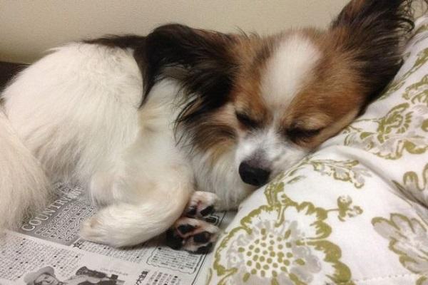 犬の膵炎におすすめのフード!すい臓の負担軽減や合併症予防に!