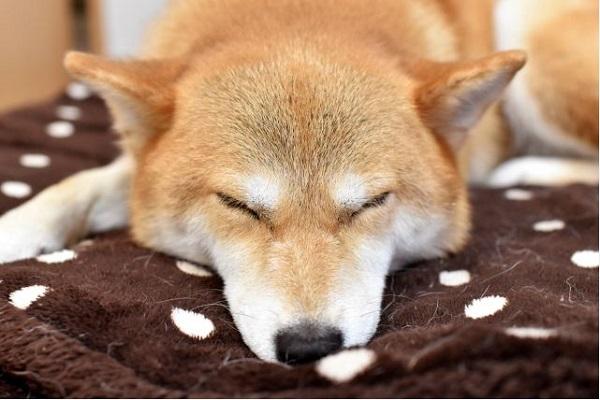 犬の心臓病と温度管理!暖房や冷房、温度差や注意点について!