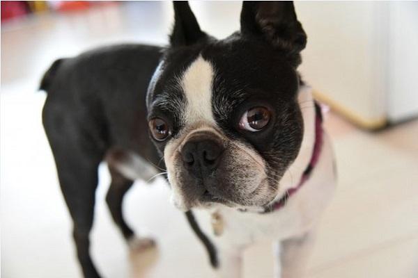 犬の肝炎・肝硬変の原因や症状と治療について!黄疸や腹水も!