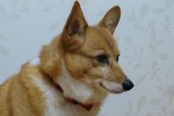 犬の慢性腎不全にビタミン剤の効果や必要性とサプリについて!