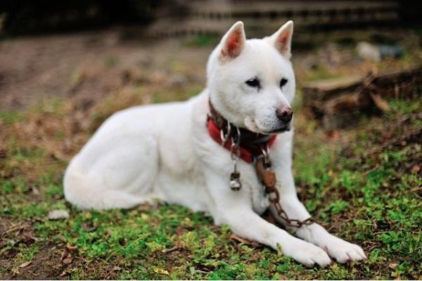 日本犬は気性が荒い?危険,凶暴と言われる理由や性格について!