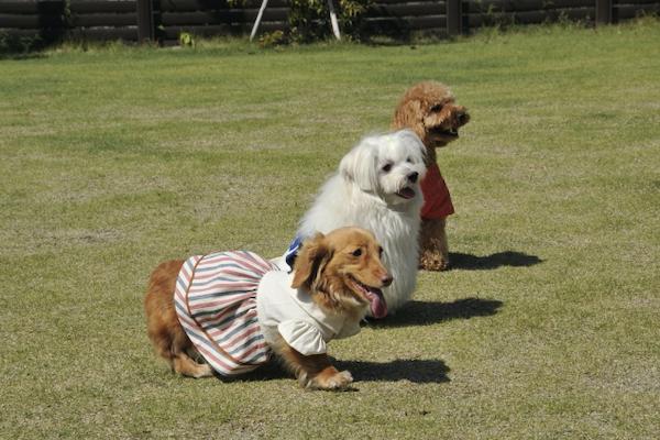 犬の骨折の予防や治癒促進にサプリの効果や必要な栄養素など!