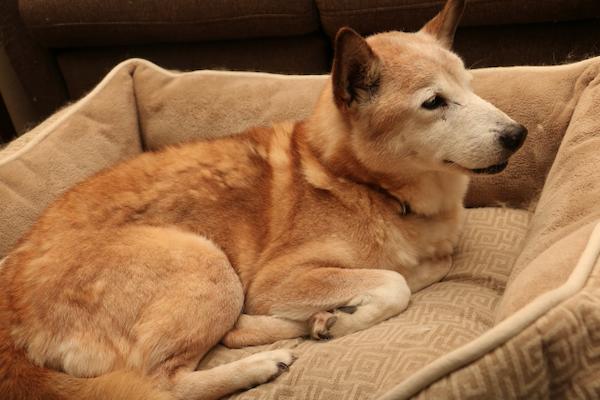 犬の前立腺肥大症の薬について!作用や効果と副作用、価格など!